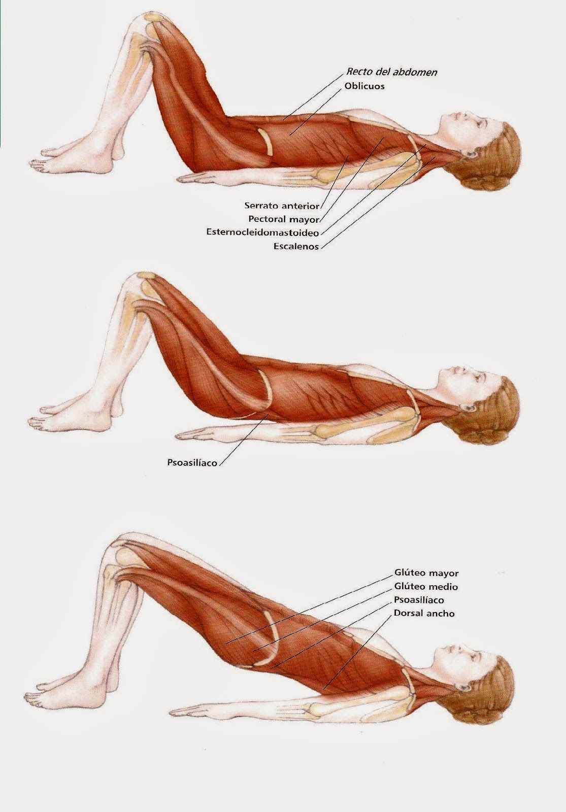 pelvic curl - Google Search | Pilates | Pinterest | Google, Yoga and ...