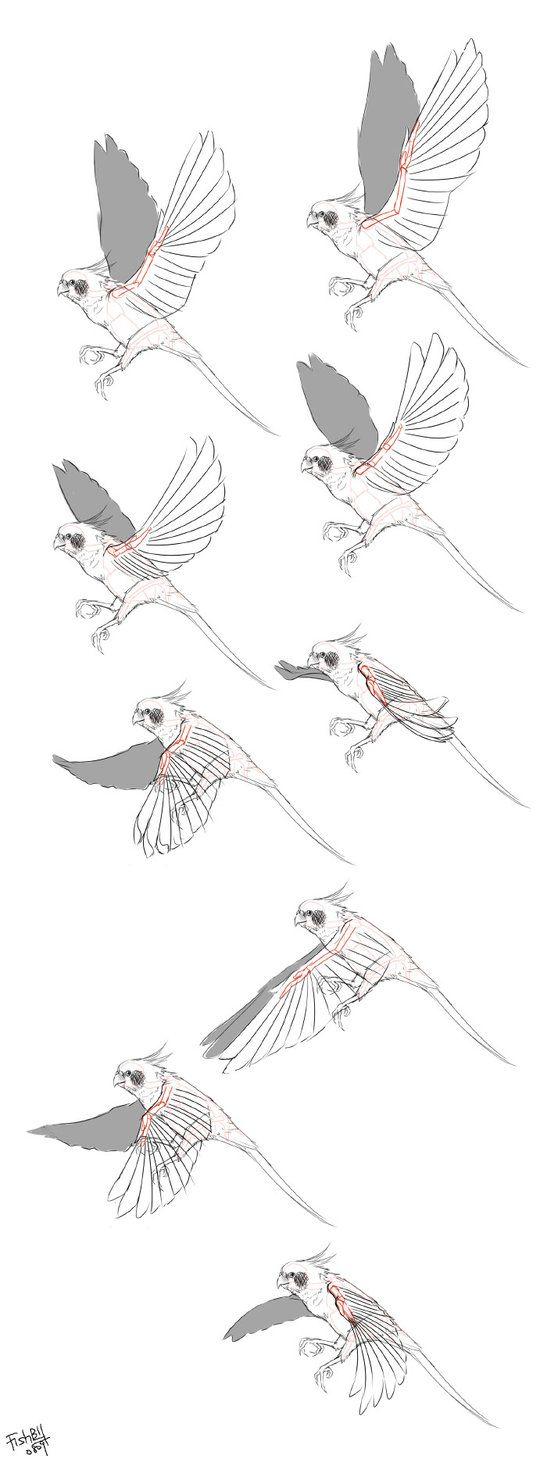 Anatomy Bird 01 by Bardi3l on DeviantArt | creature reference ...