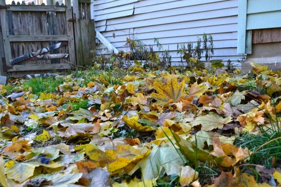 Fall in my back yard