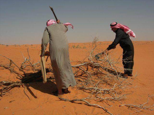 الزلفي الربيع منتديات مكشات Desert Travel Trip Deserts