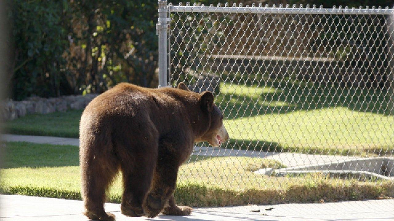 Fatal Bear Attacks Rare But Possible Bear Attack Bear Black Bear Attacks