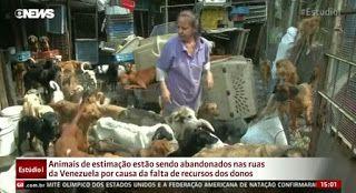 """""""O Grito do Bicho"""": Animais de estimação estão sendo abandonados na Ve..."""