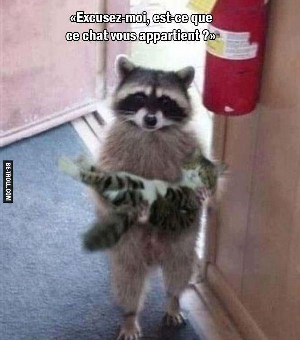 Favori Est-ce que ce chat vous appartient ? | Be-troll | Animaux rigolos  VT03