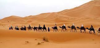 desert sahara neige - Recherche Google