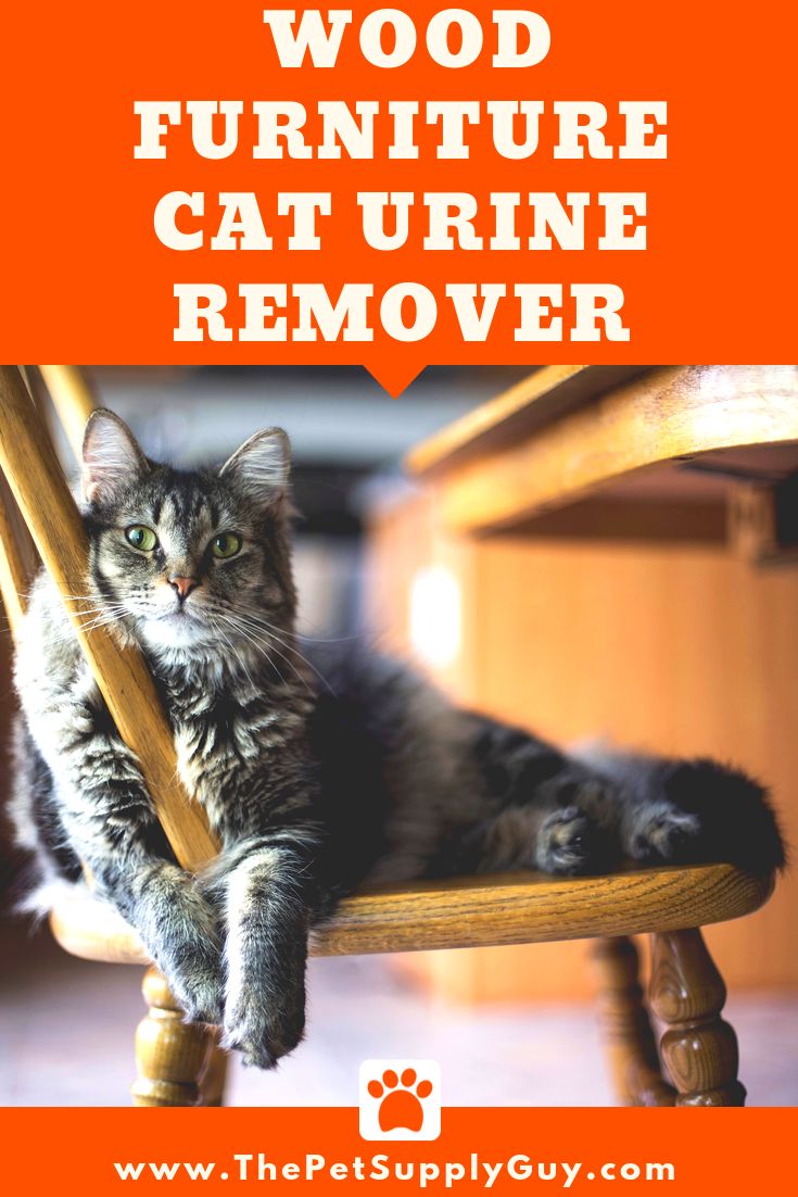 Cat Urine Out Of Wood Furniture