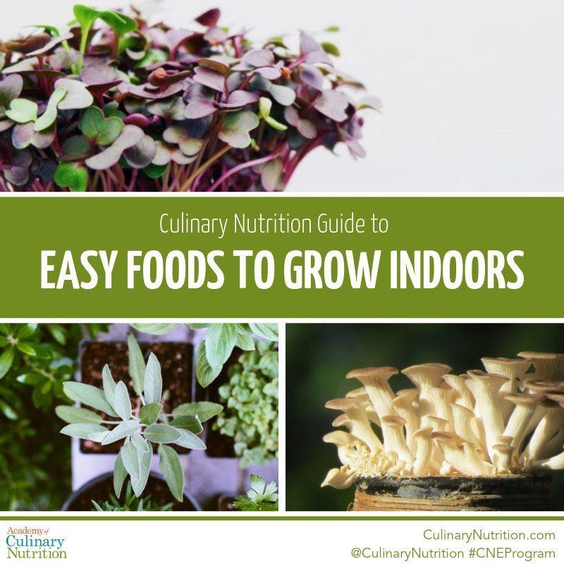 6 Easy Foods To Grow Indoors Growing Herbs Indoors Easy 400 x 300