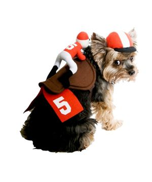 16 Silly Halloween Costumes for Pets