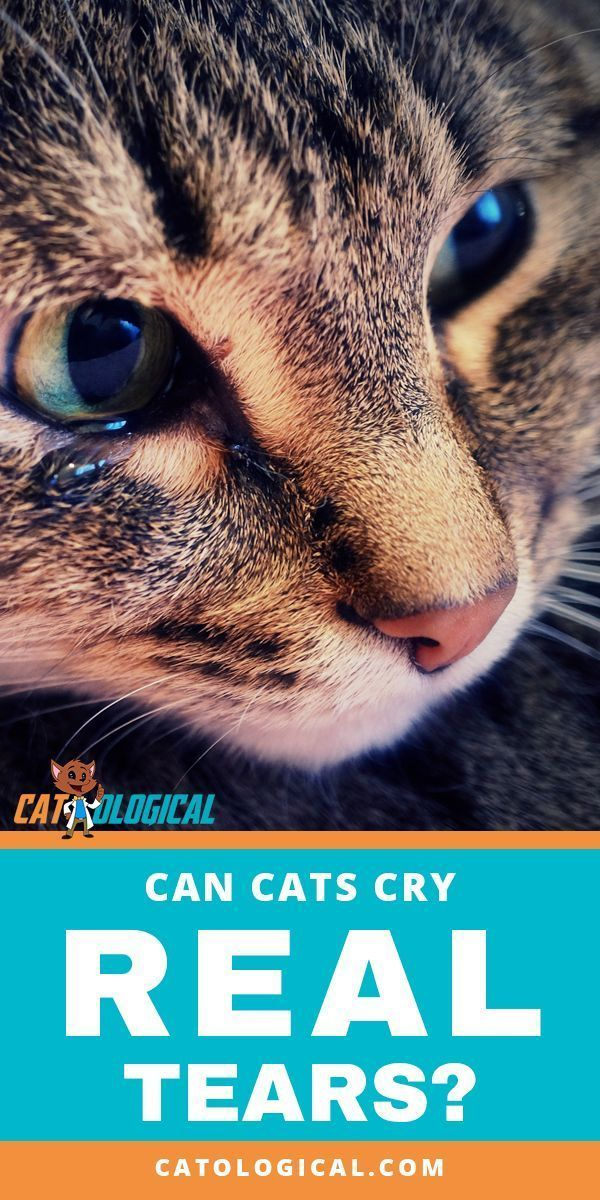 Can cats cry real tears like humans cat? Or do kitten