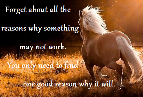 Pin by Debbie WilsonWhite on Horse Lovers Equine quotes