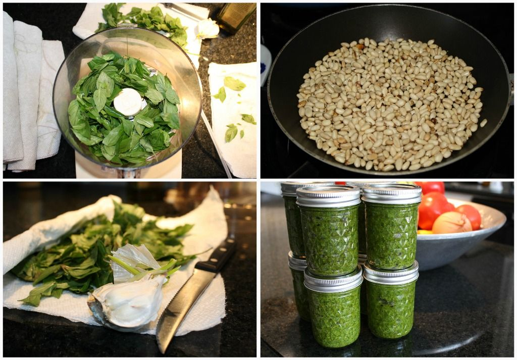 Basil garden? Turn it into great home made Christmas gifts! Give your neighbors festively green pesto over the holidays.