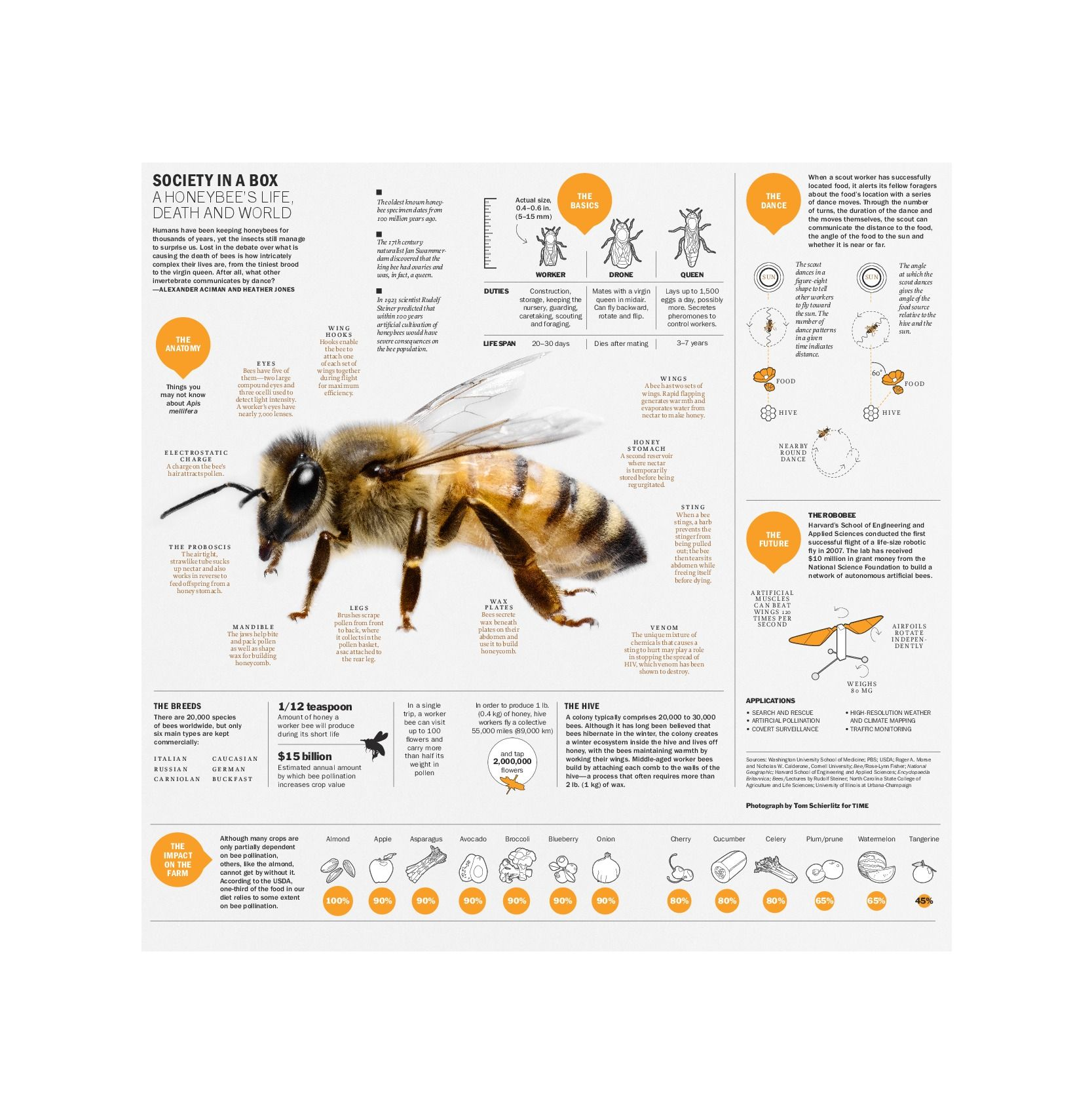 Humans Have Been Keeping Honeybees For Thousands Of Years