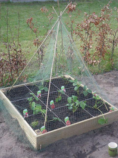 eigen moestuin maken om groenten te kweken? maak zelf een