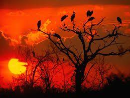 Resultado de imagen para paisajes de africa
