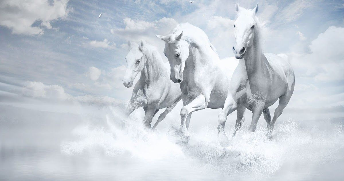 3d Running Horse Wallpaper Desktop Background Running Horses Wallpaper 63 Images Source Getwallpapers Com 7 Horse Running Images Hd 850x995 Wallpaper Ecop