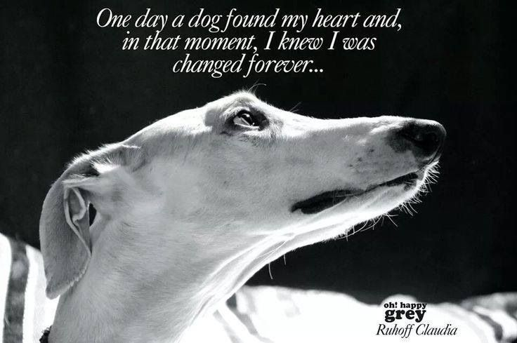 Greyhound Shipping Quote >> Greyhound Love Quotes Yahoo Search Results My Love Of Greyhounds