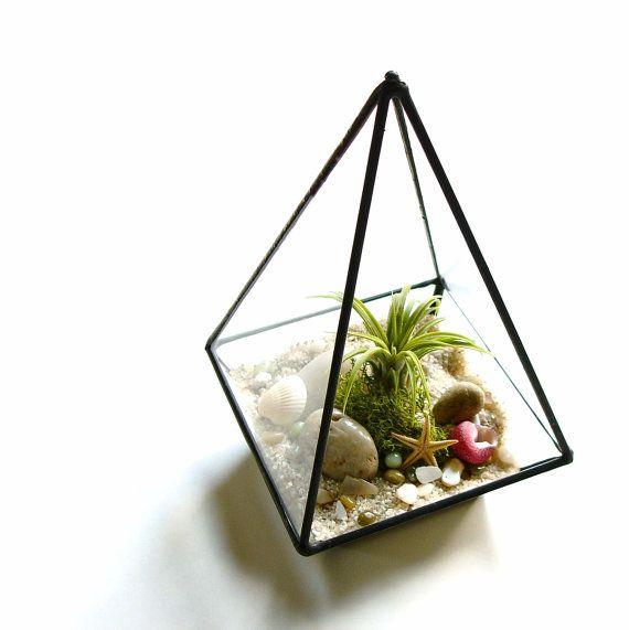 Glass Terrarium Air Plant Terrarium Kit With Shells Desk Accessory Terrariums Kits Air Plant Terrarium Glass Terrarium