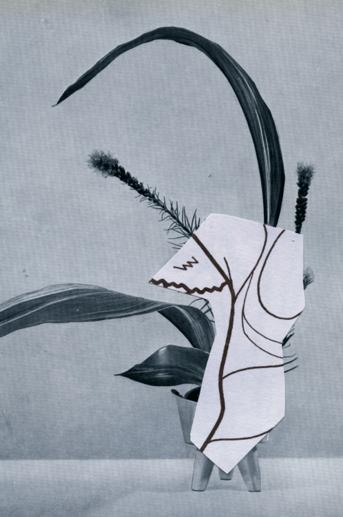 nowness:Strange PlantsPreview the botanical magazine's second volume