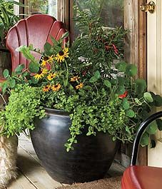 Plant list included for this container arrangement