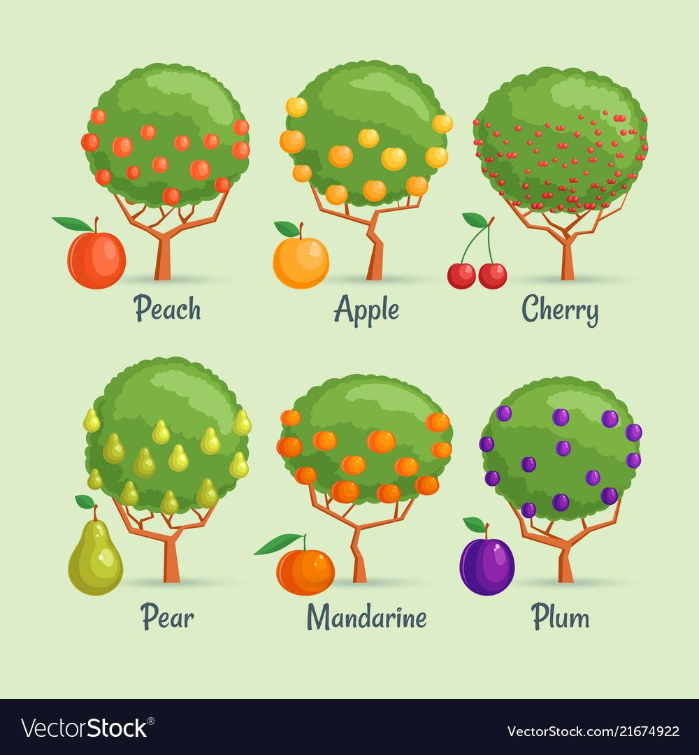 Fruit Trees Set Royalty Free Vector Image Vectorstock Fruit Trees Fruit Tree