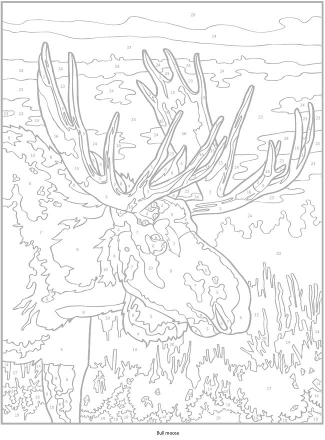 Welcome To Dover Publications Coloring Pages Animal Coloring Pages Color By Number Printable