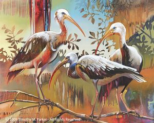 Abstract Ibis Painting - Artist Tim Parker