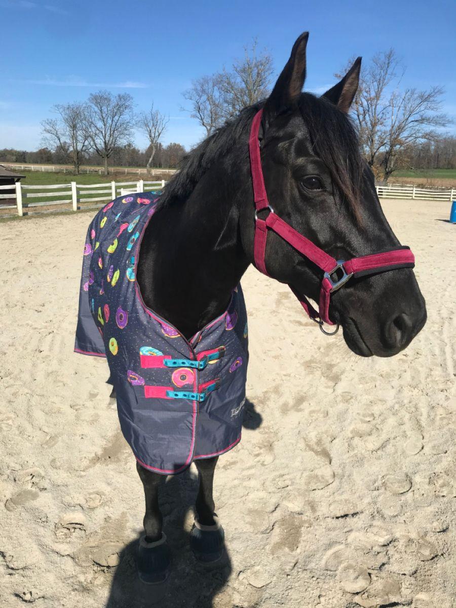 bonnet quarter sheet Horse all purpose OTTB jump pad