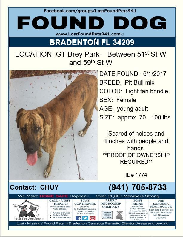 Do You Know Me Found Dog Pitbull Bully Brindle Female Bradenton Fl 34209 Lostfoundpets941 Lostdog Losing A Pet Losing A Dog Service Animal
