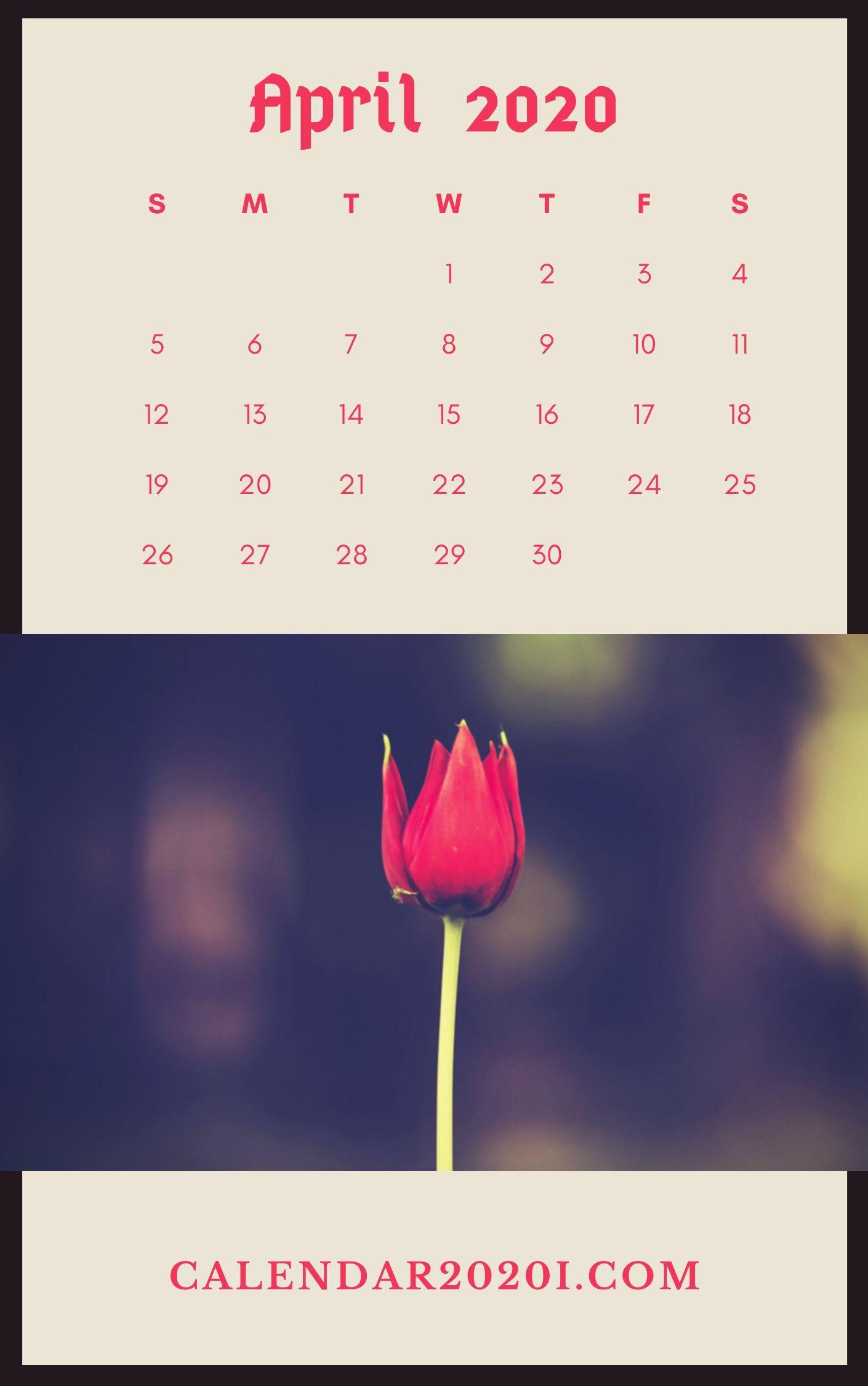 Birth Month Flower Grow Kit Garden Gifts, Birthday Gifts