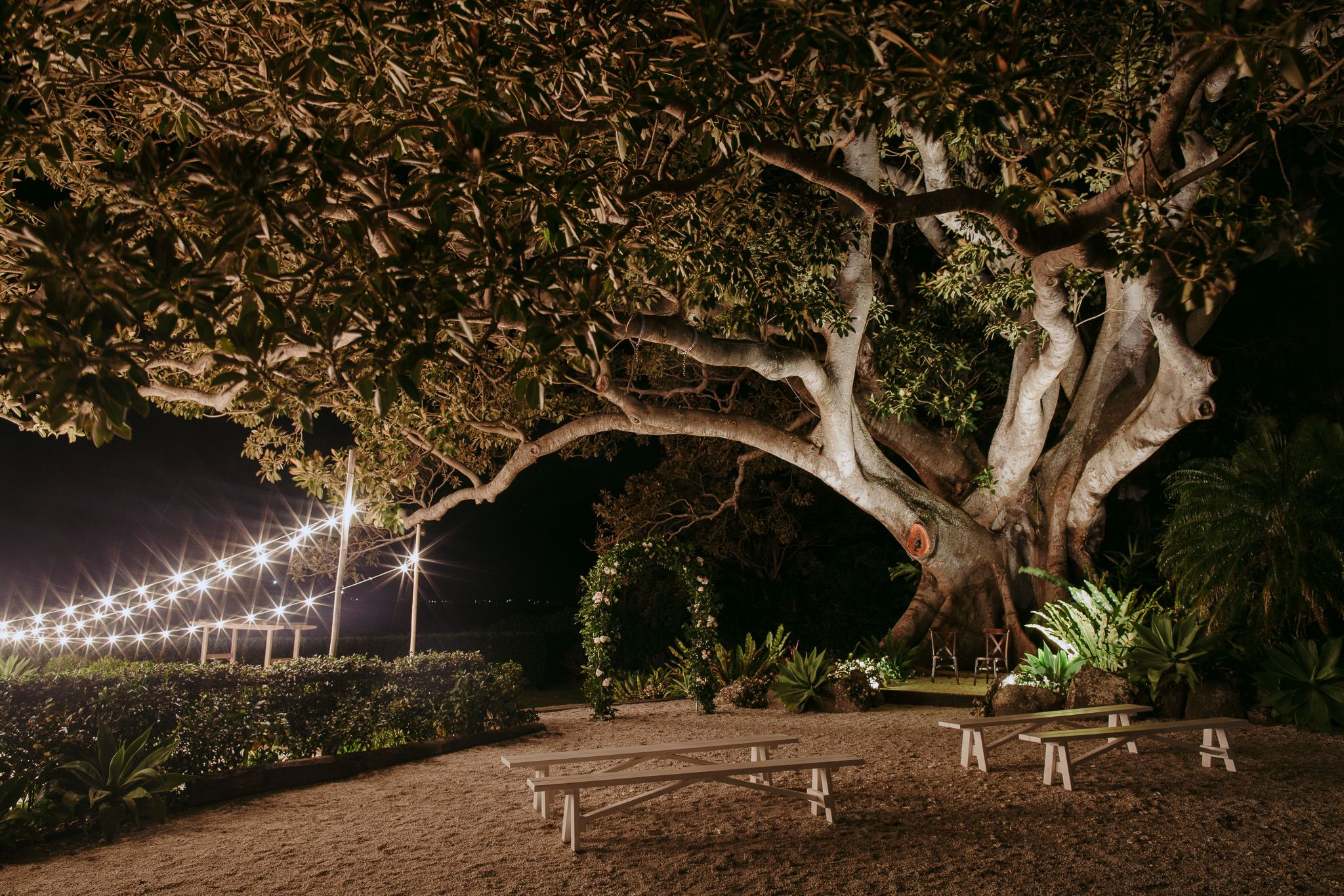 The Fig Tree By Night Lighting Byron Audio Styling