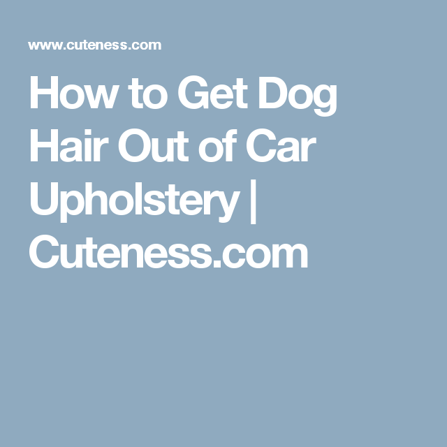 My Dog Ate Carpet Fibers: How To Get Dog Hair Out Of Car Upholstery