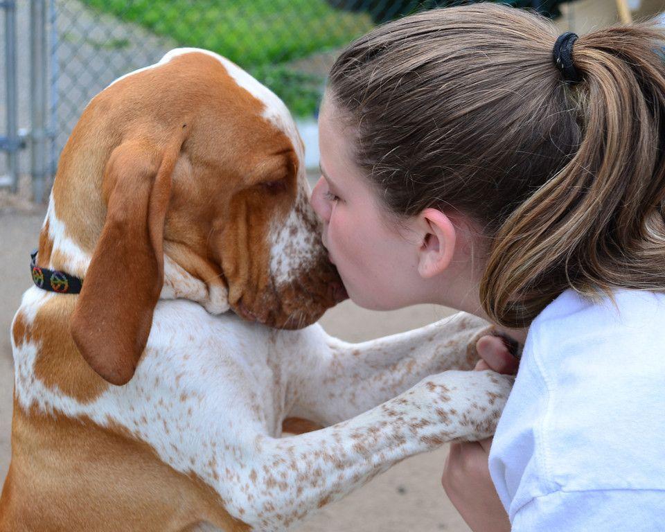 картинки как собаки целую может проявляться определенного