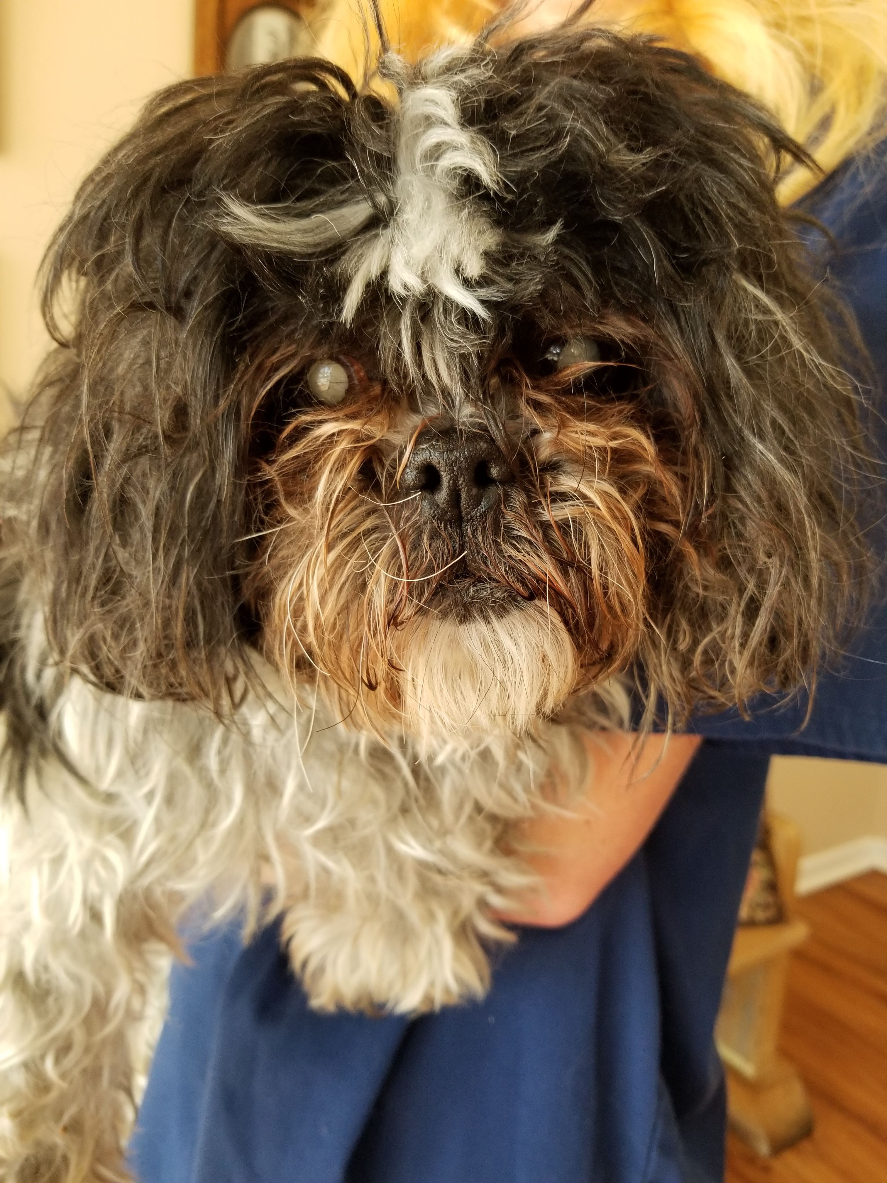 Adopt Peppermint Patty On Peppermint Patties Small Dog Breeds