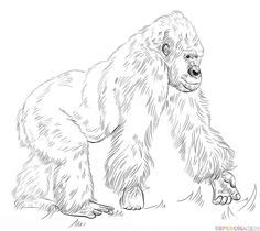 How To Draw A Silverback Gorilla Step By Step Drawing Tutorials Animal Coloring Pages Silverback Gorilla Drawing Tutorial