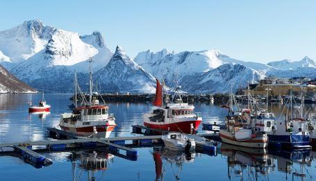 фауна норвегии - Поиск в Google
