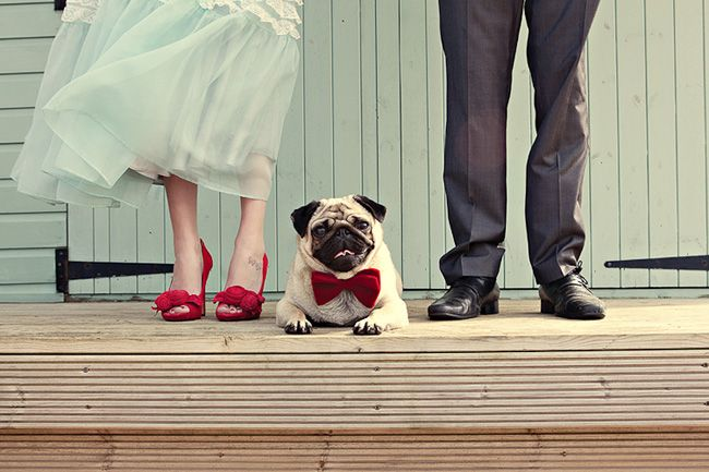 red shoes, turquoise tulle, pressed trousers and a pug in a bow tie