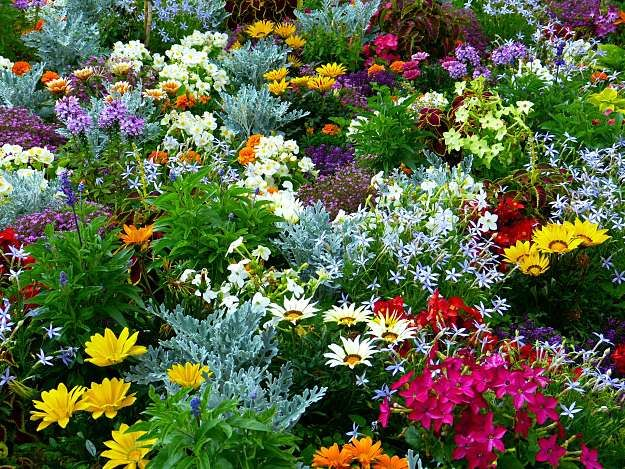 Flower Gardening 101 | Flower Gardening Made Easy For A Beginner To Achieve  A Dream Garden