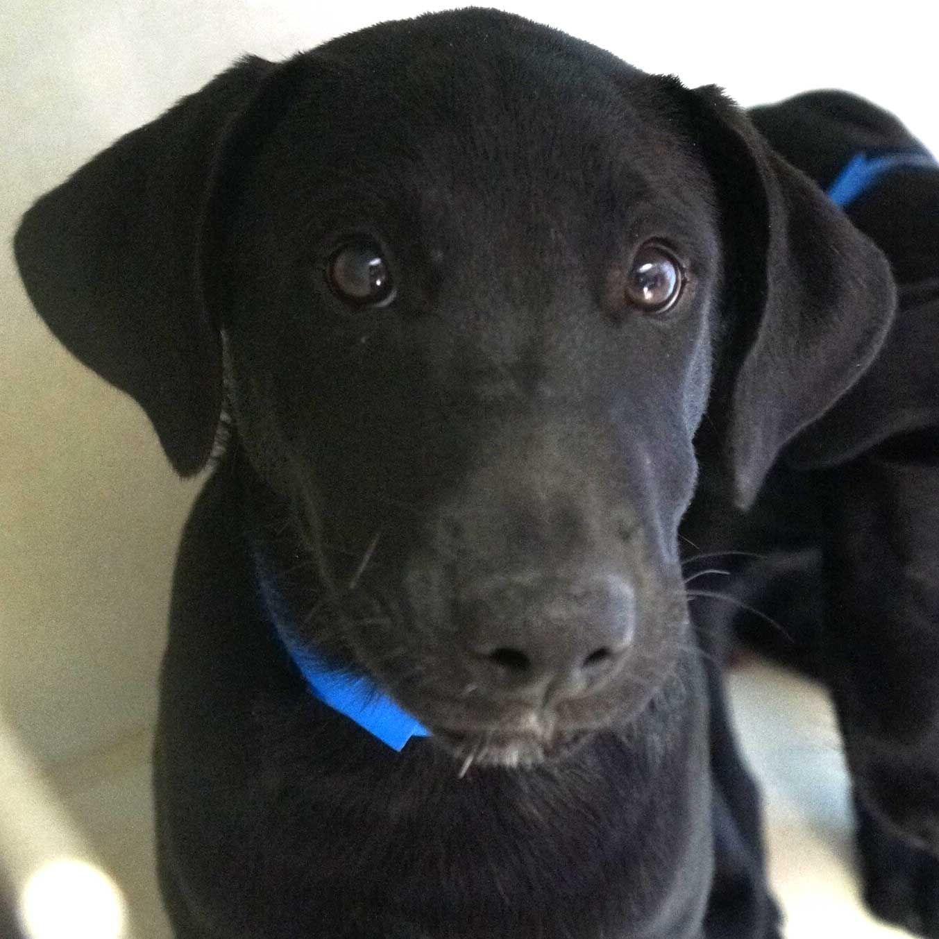 Dog Adoption San Diego Adopt A Dog Cat Adoption San