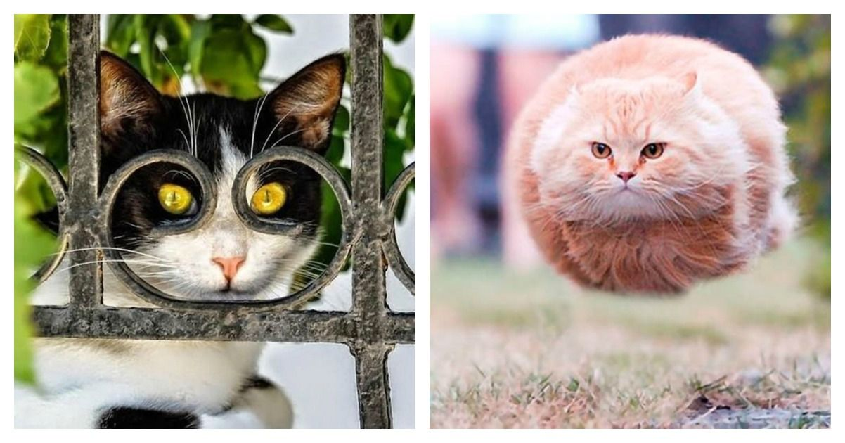 20 Cats That Were Photographed At The Right Time, Right