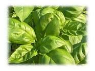 Basil season is coming.