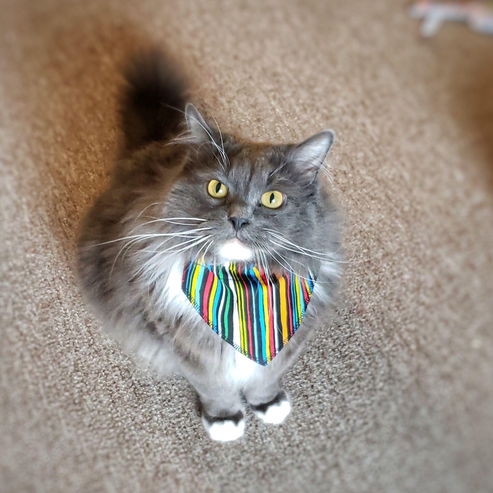 Seriously Striped Cat Bandana Cat Bandana Striped Cat Cats