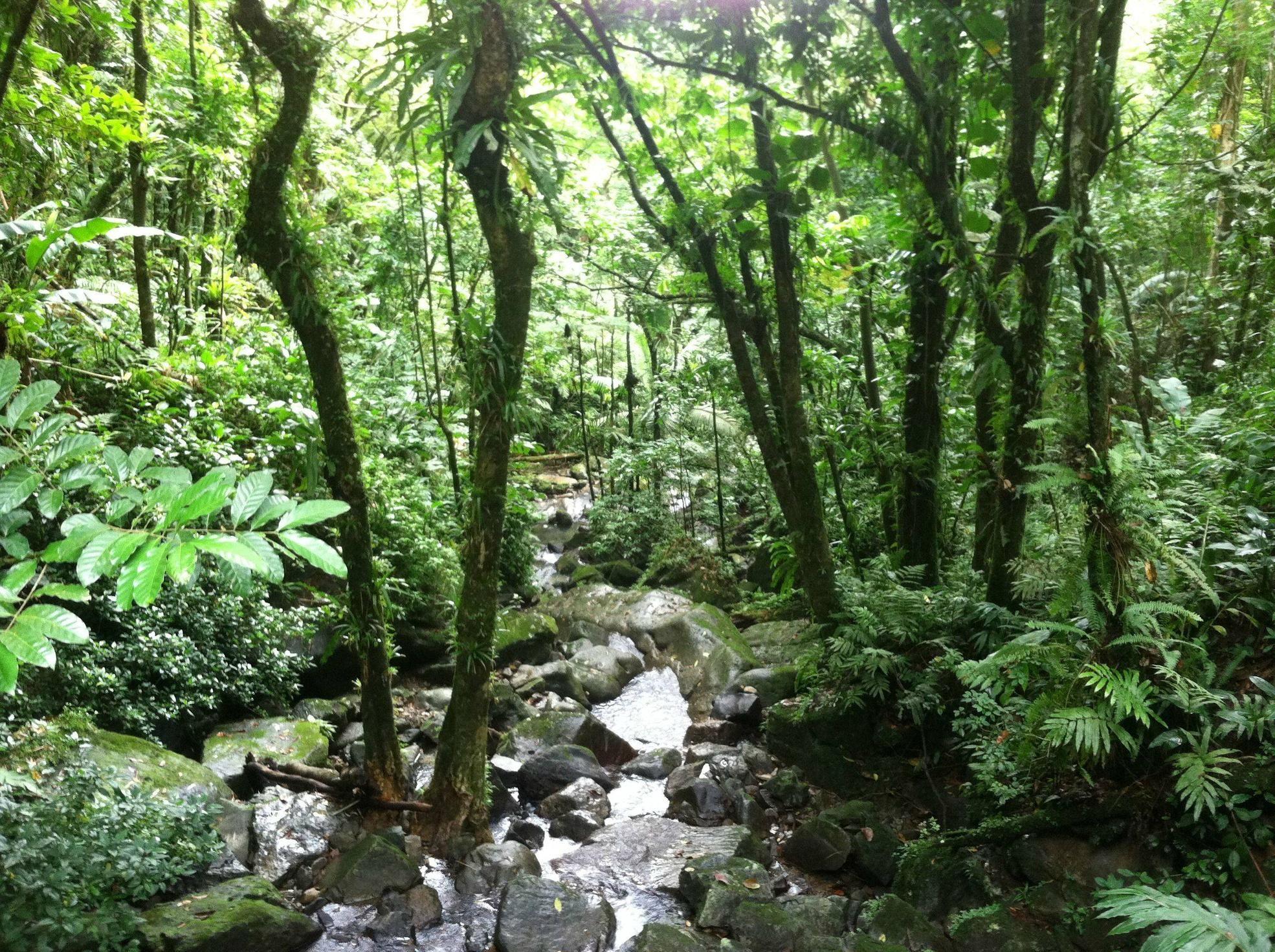 Puerto Rico Rainforest