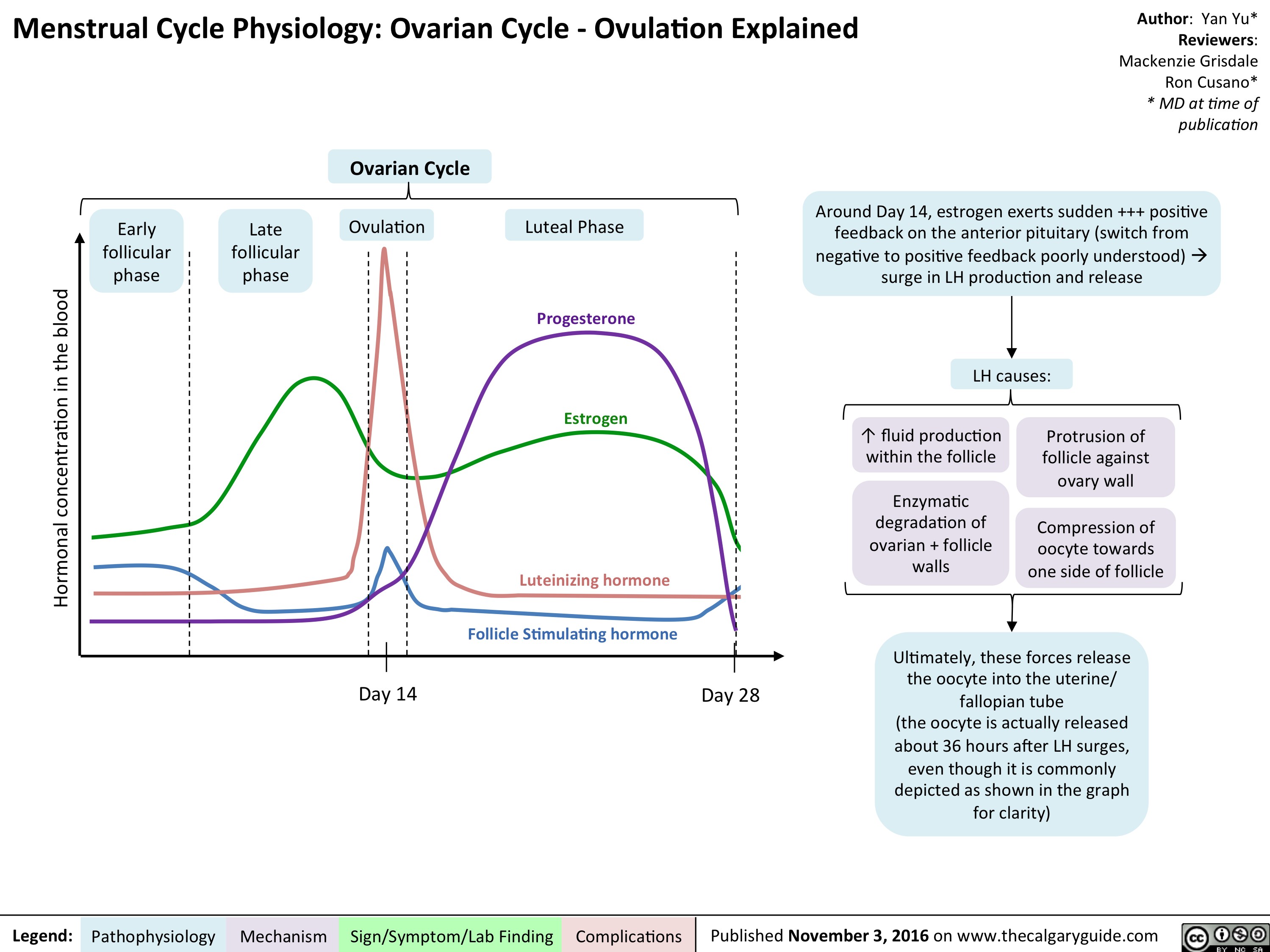 Finalized mg rc yy menstrual cycle physiology female cycle finalized mg rc yy menstrual cycle physiology female cycle pathophysiology pinterest menstrual cycle fandeluxe Images