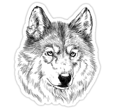 Wolf Stickers Wolf Face Wolf Sketch Wolf Drawing
