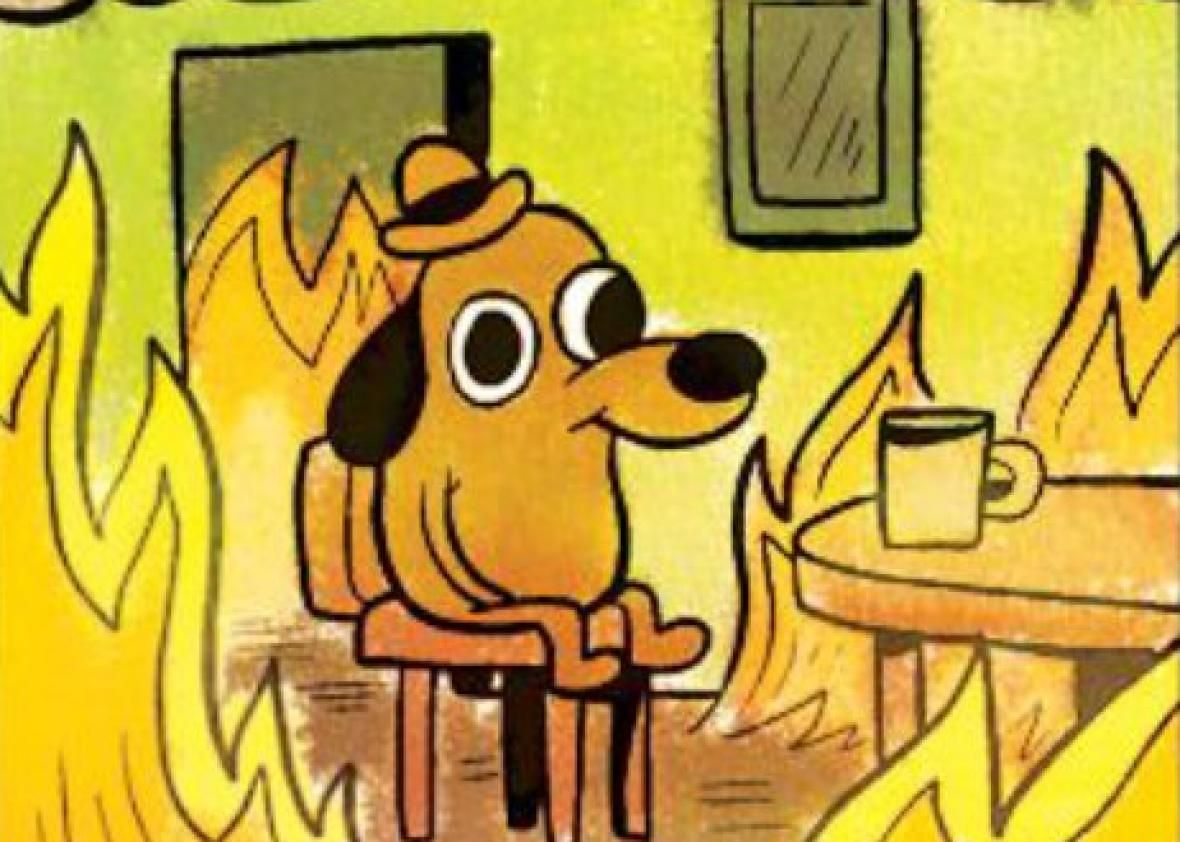 """An Important Update From the """"This Is Fine"""" Dog Writer"""