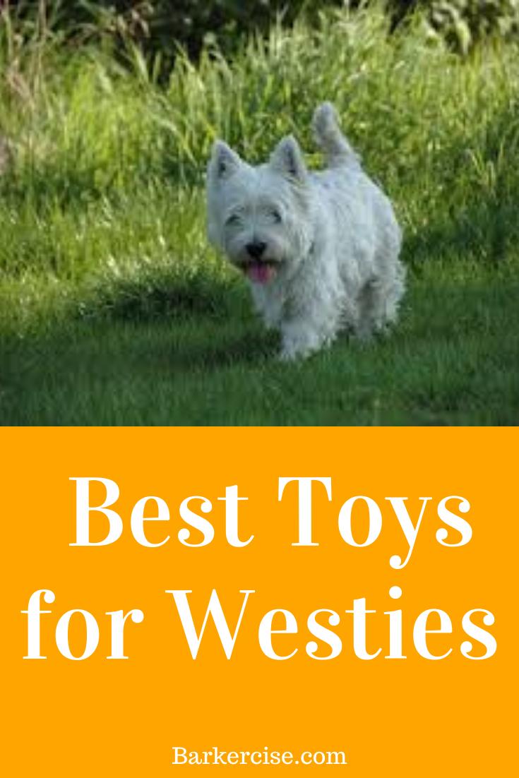 Best Toys For West Highland Terriers In 2020 Westie Puppies Westie Dogs Westies