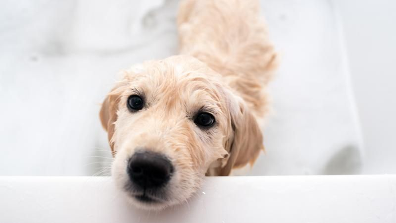 How To Bath Your Dog Without Flooding Or Injury Dogs English