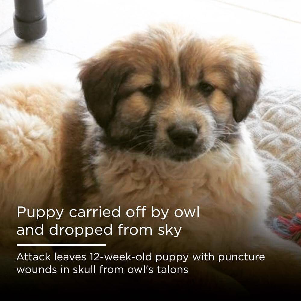 New The 10 Best Home Decor With Pictures Puppy Is Recovering