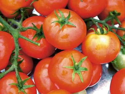 Totem Tomato Perfect Size for Patio Containers