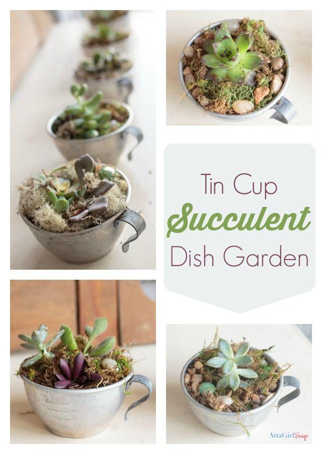 Tin cup succulent dish garden dish garden hens and gardens for Succulent dish garden designs