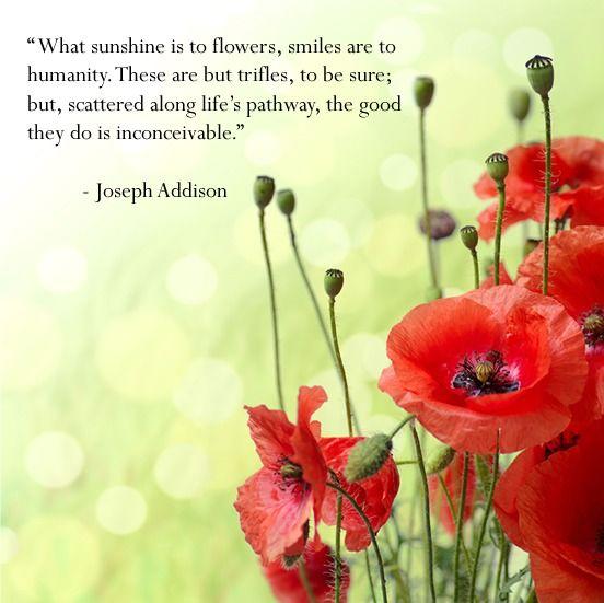 Happiness quote smiles poppy words pinterest quotes words happiness quote smiles poppy mightylinksfo
